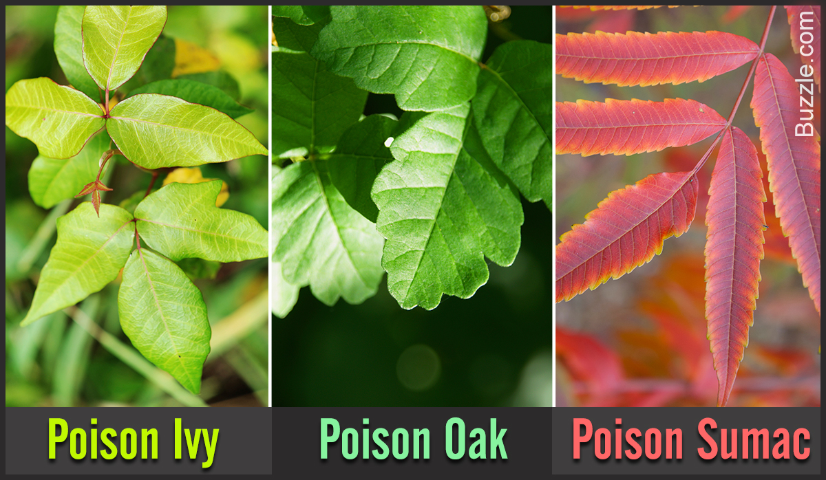how-to-identify-poison-plants